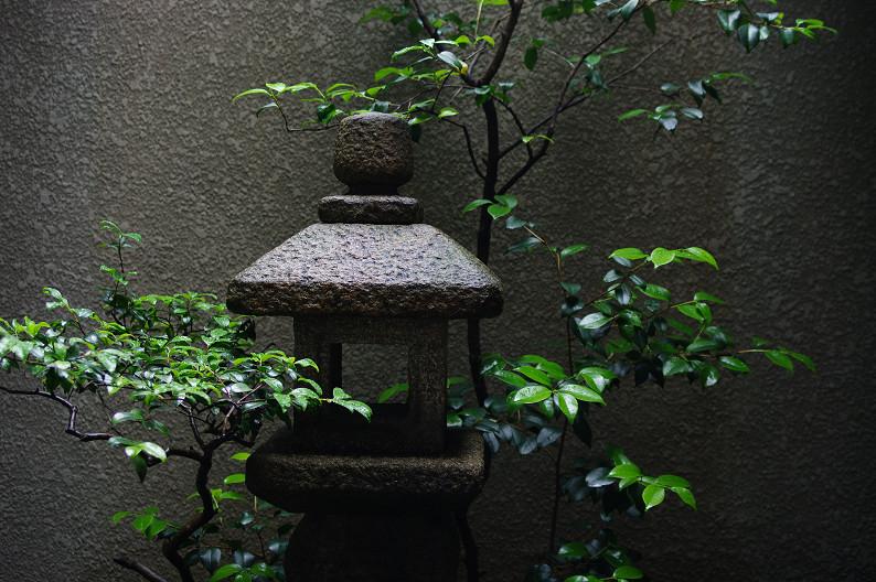 雨のご近所スナップ..._f0152550_12553613.jpg