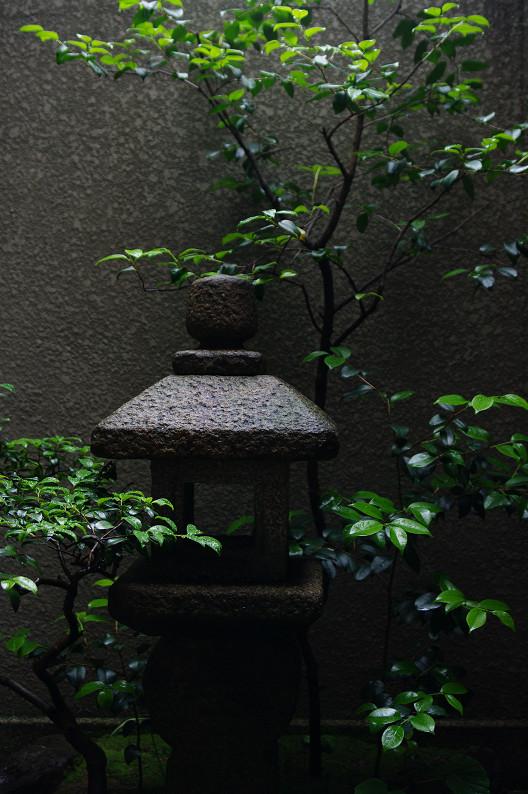 雨のご近所スナップ..._f0152550_1255442.jpg