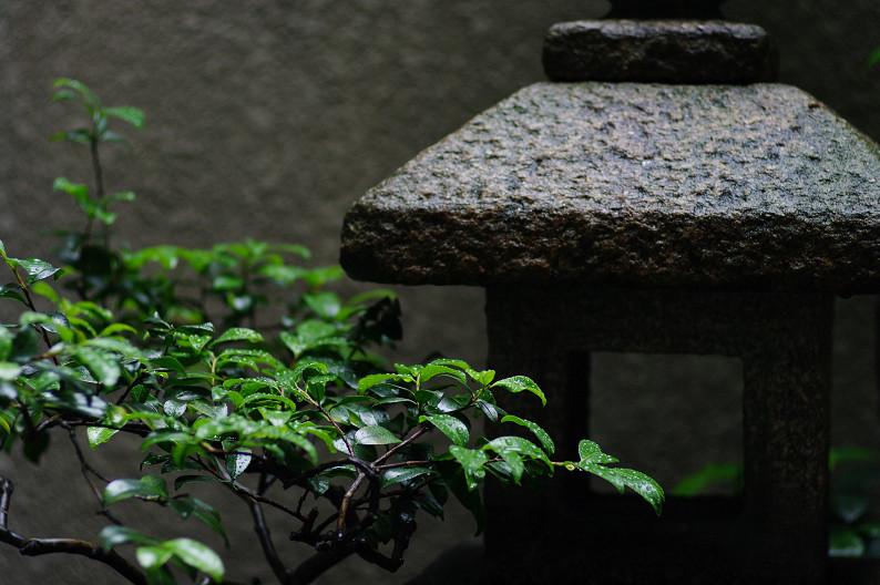 雨のご近所スナップ..._f0152550_12555165.jpg