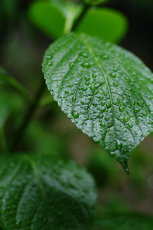 雨のご近所スナップ..._f0152550_12562012.jpg