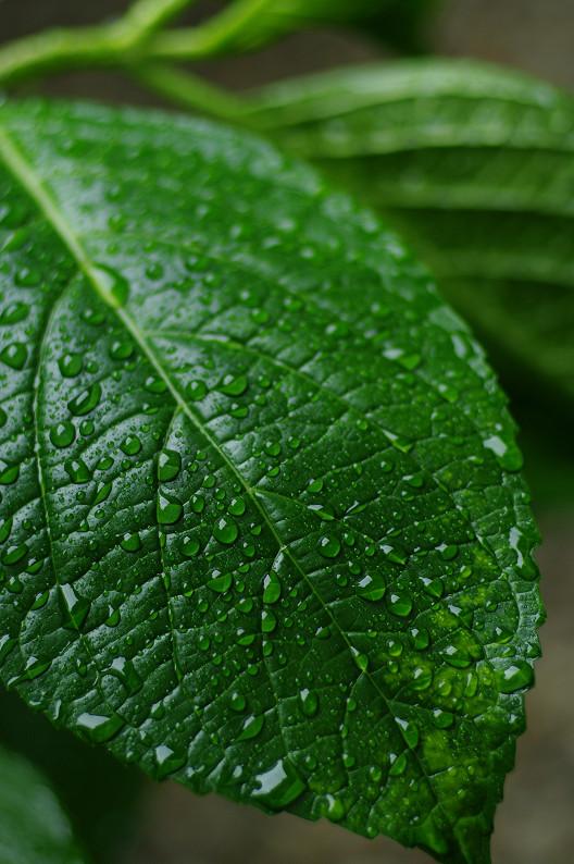 雨のご近所スナップ..._f0152550_12563125.jpg
