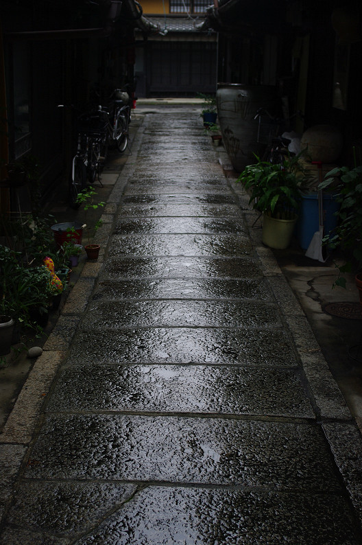 雨のご近所スナップ..._f0152550_12564346.jpg