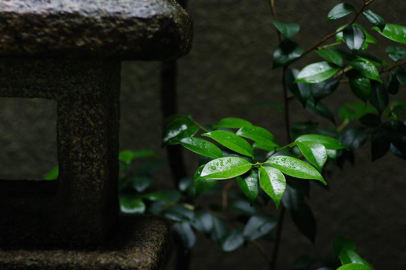 雨のご近所スナップ..._f0152550_1256942.jpg