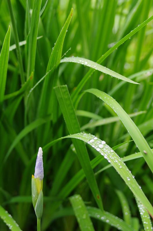 雨のご近所スナップ..._f0152550_15105856.jpg