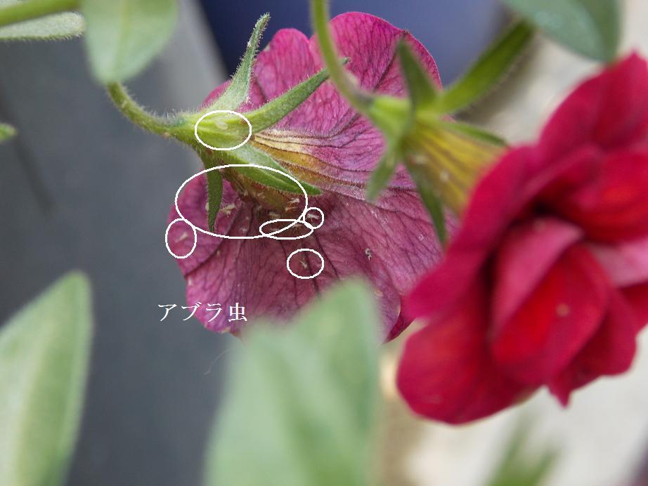 b0193252_20142887.jpg