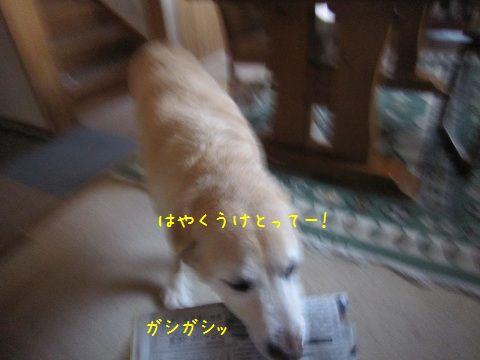 d0120665_1843598.jpg