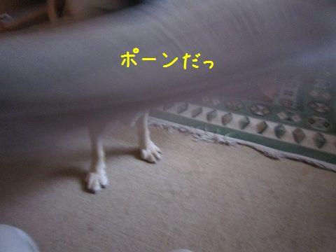 d0120665_1844879.jpg