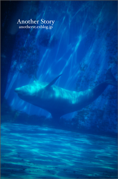 swimming_a0238574_1830482.jpg