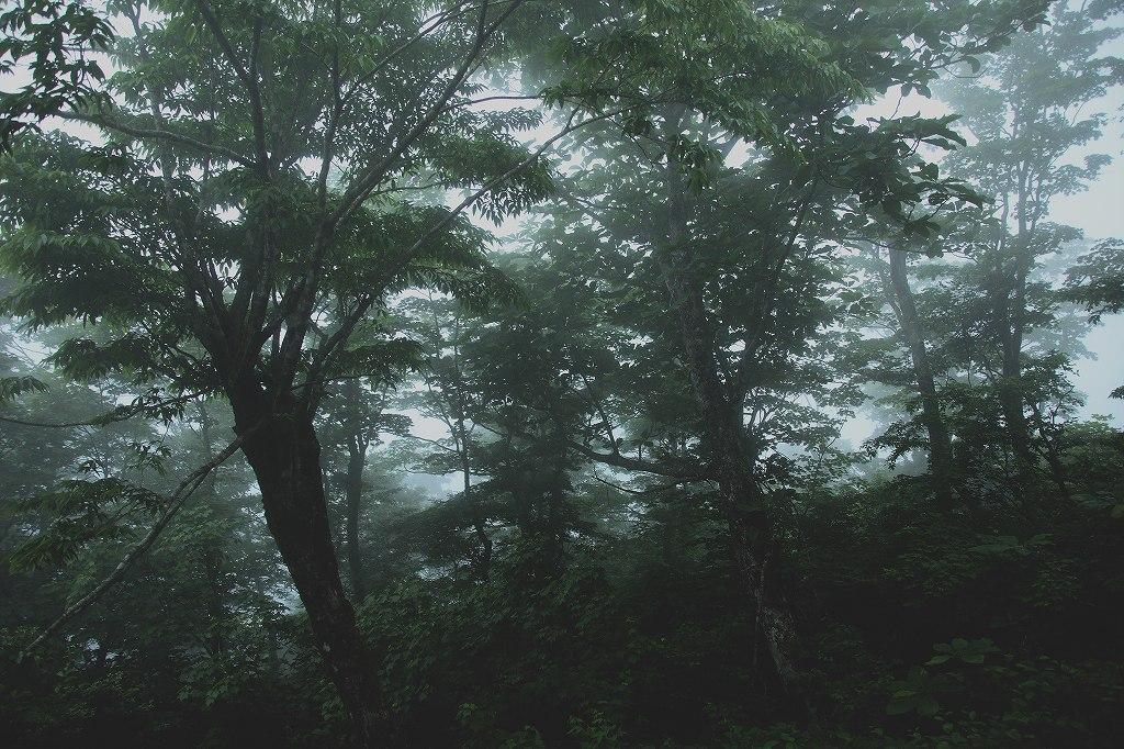 山に暮らせば_e0091879_12454643.jpg