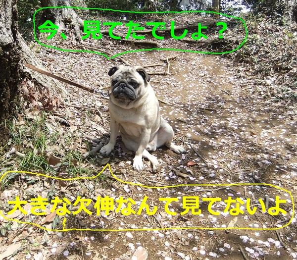f0063791_22243997.jpg