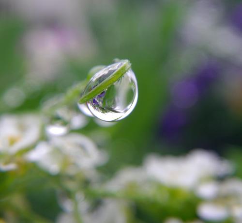 梅雨の朝のビオラなど・・・♪_a0136293_207828.jpg