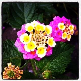 お花の中のお花畑_d0015894_22205980.jpg