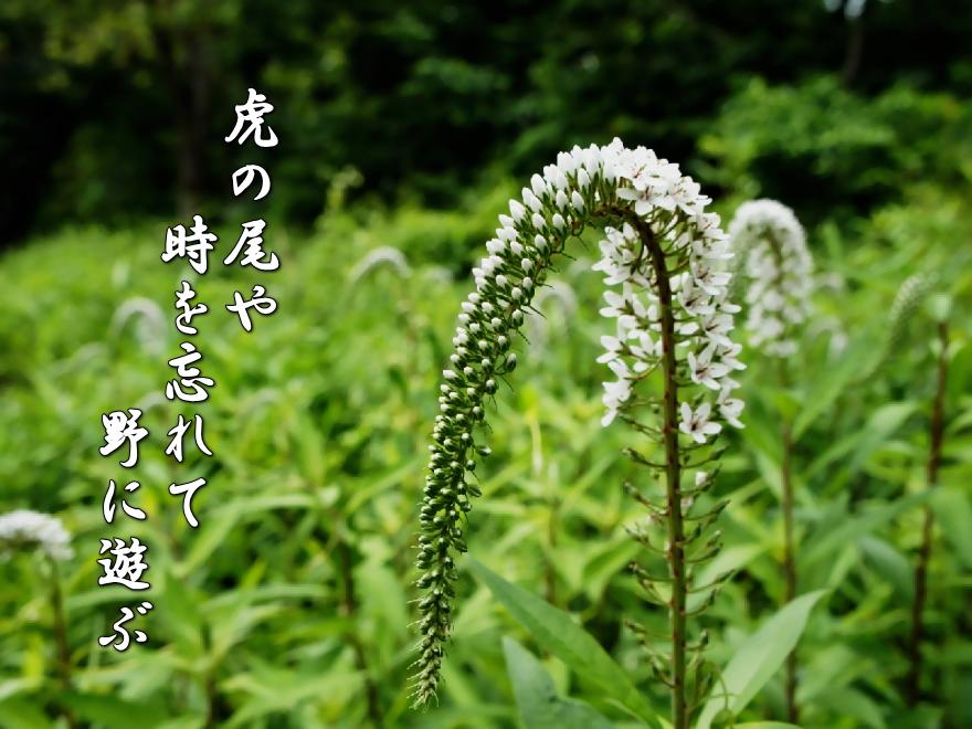 f0137096_15203543.jpg