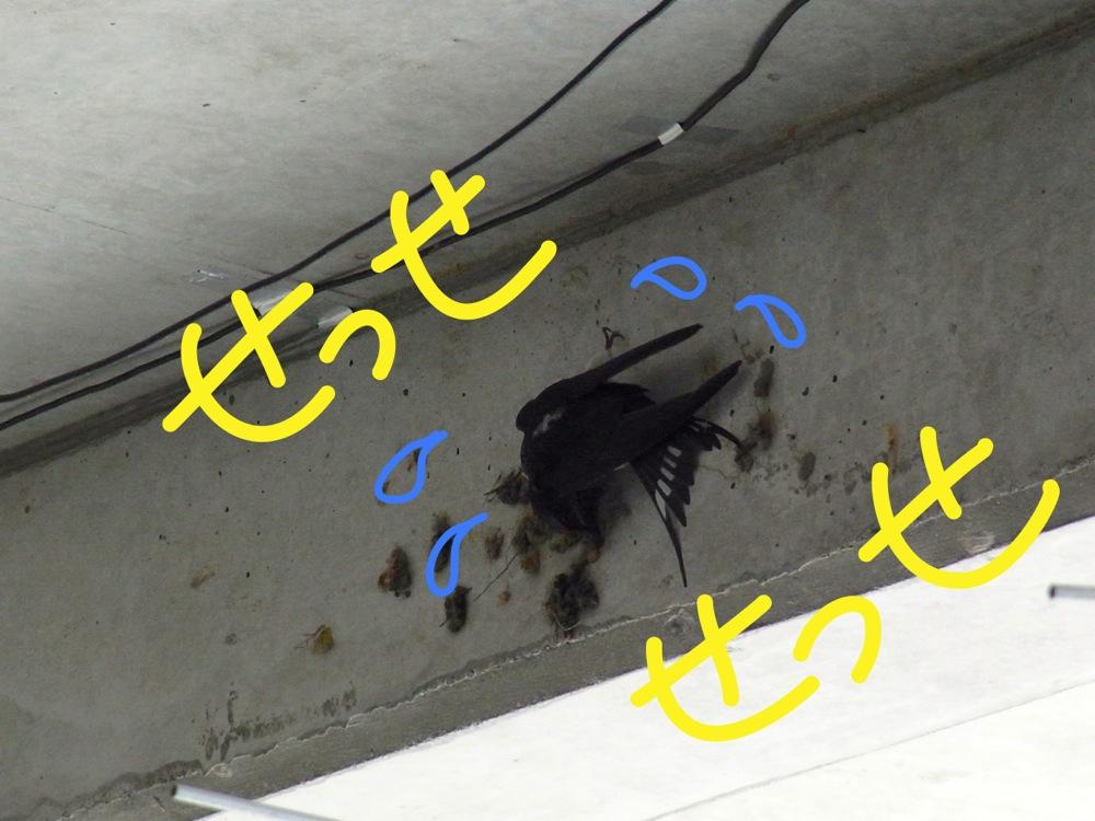 c0167798_1831910.jpg