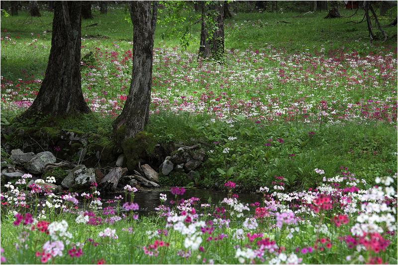 Secret Garden_e0031502_16283289.jpg