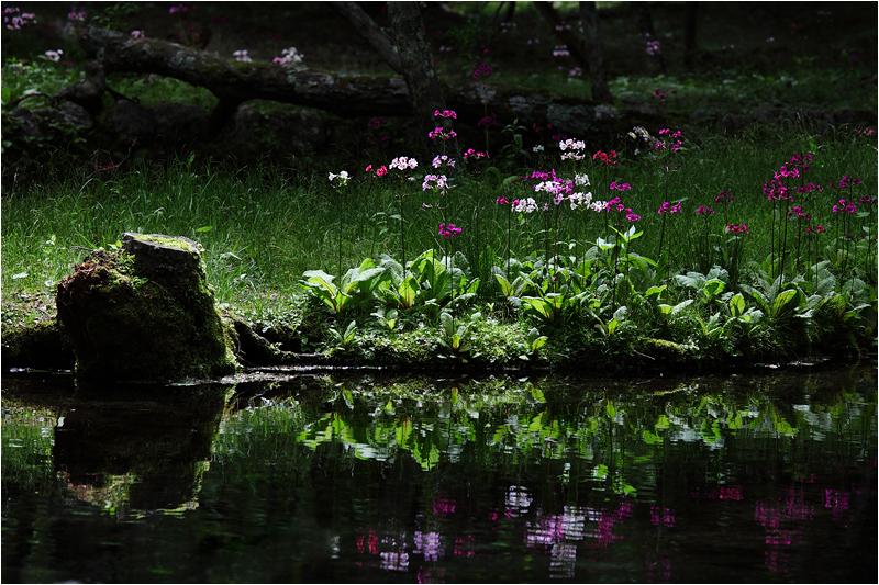 Secret Garden_e0031502_16302295.jpg