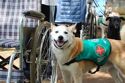 東北の被災地の犬の命を救う!_d0050503_9311157.jpg
