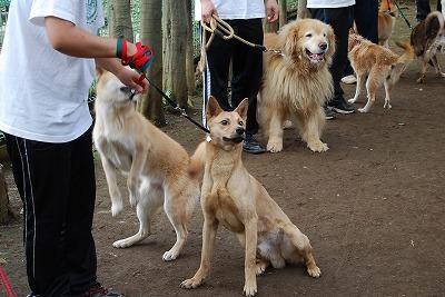 東北の被災地の犬の命を救う!_d0050503_9312098.jpg