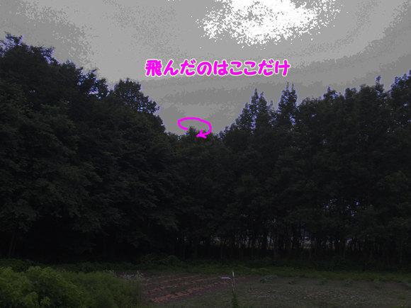 e0253104_2232178.jpg