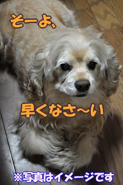 b0067012_940789.jpg
