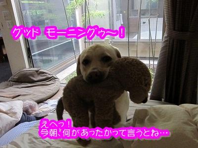 ザック、幸せな朝~♪_e0192217_8374959.jpg