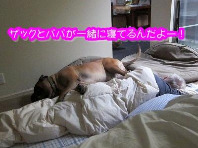 ザック、幸せな朝~♪_e0192217_83811.jpg