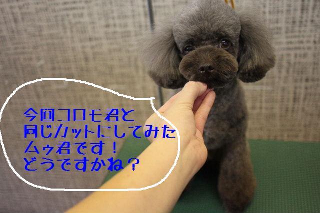 b0130018_22175325.jpg