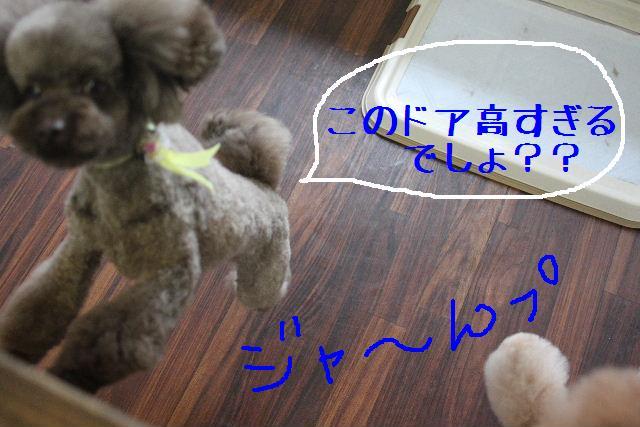 b0130018_22181680.jpg