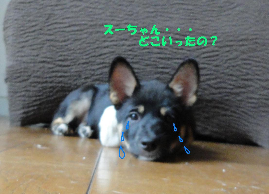 幸せバトン_b0207320_2359438.jpg