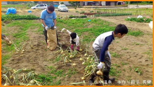 玉葱今年最後の収穫の巻_a0041925_042053.jpg