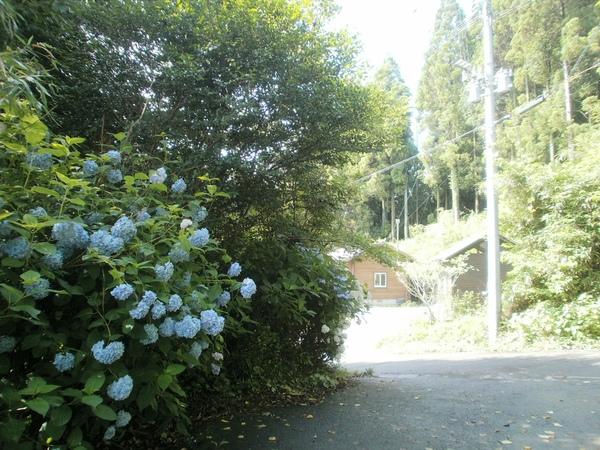 我が家の周りの・・紫陽花の花_a0174458_10253711.jpg