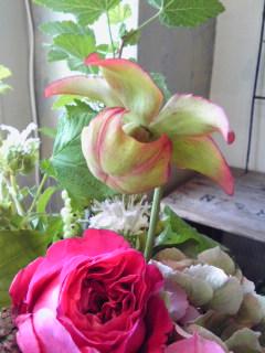 サラセニアの花。。。_a0229658_1635189.jpg