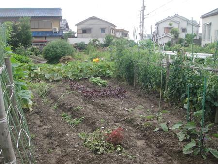 畑の軽作業_c0108460_20591788.jpg