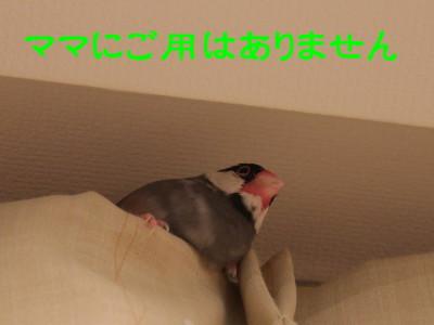 b0158061_071836.jpg