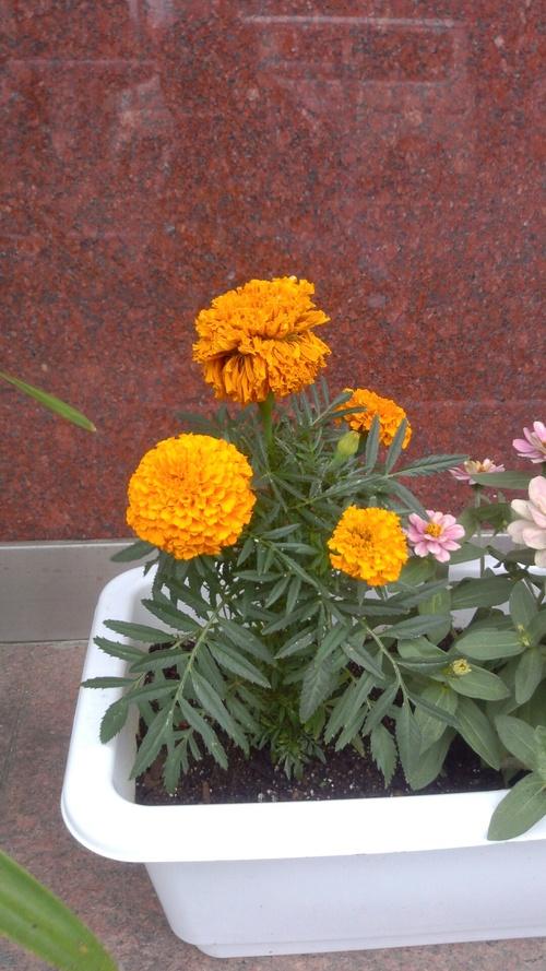 お花~☆_c0231772_1702683.jpg