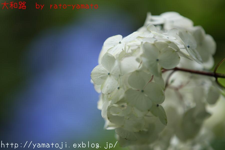 f0236776_2126105.jpg