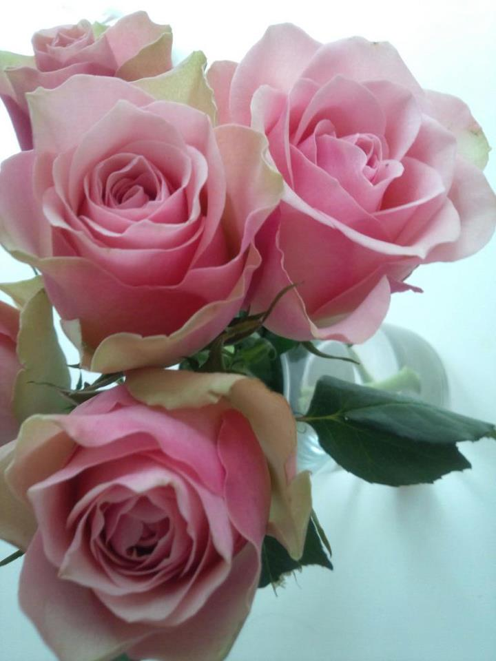 with pink roses_b0195783_10291123.jpg