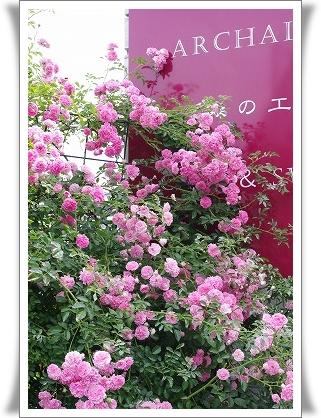 ***~もう少し 薔薇を~***_c0207890_0394088.jpg