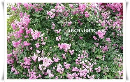 ***~もう少し 薔薇を~***_c0207890_0405017.jpg