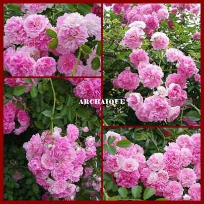 ***~もう少し 薔薇を~***_c0207890_0412320.jpg