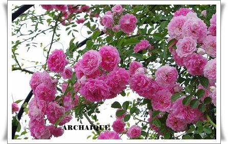 ***~もう少し 薔薇を~***_c0207890_0424660.jpg