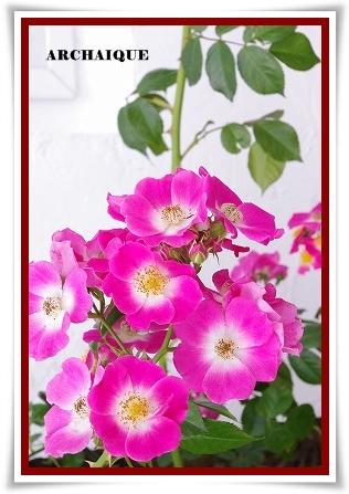***~もう少し 薔薇を~***_c0207890_0433390.jpg