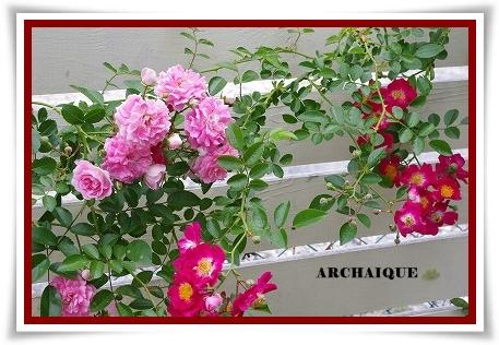 ***~もう少し 薔薇を~***_c0207890_0442229.jpg