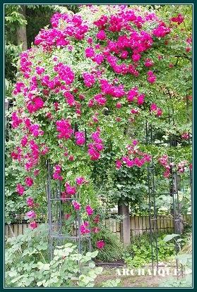 ***~もう少し 薔薇を~***_c0207890_045362.jpg