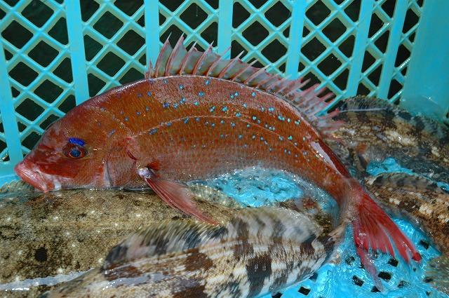 魚が好き   スタート!_d0268290_11175856.jpg