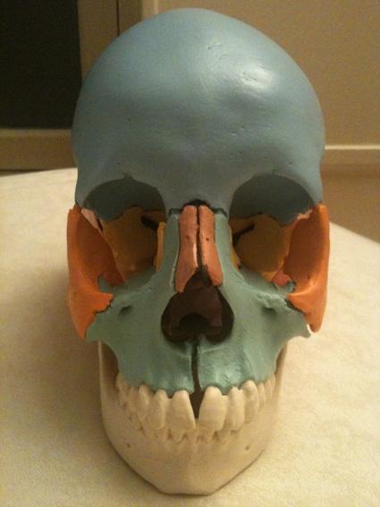 耳鼻咽喉の症状とオステオパシー_c0202508_722074.jpg