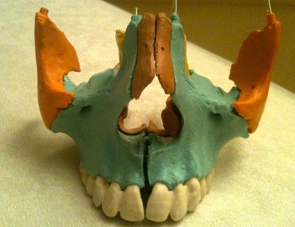 耳鼻咽喉の症状とオステオパシー_c0202508_751823.jpg