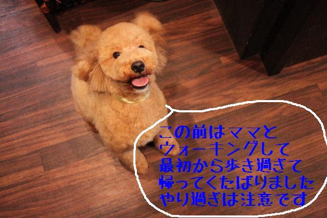 b0130018_231382.jpg