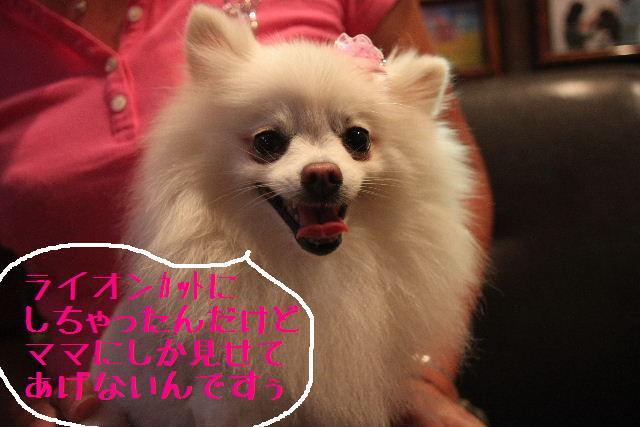 b0130018_2393681.jpg