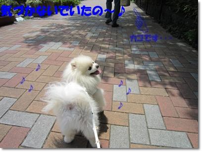 b0167519_912194.jpg